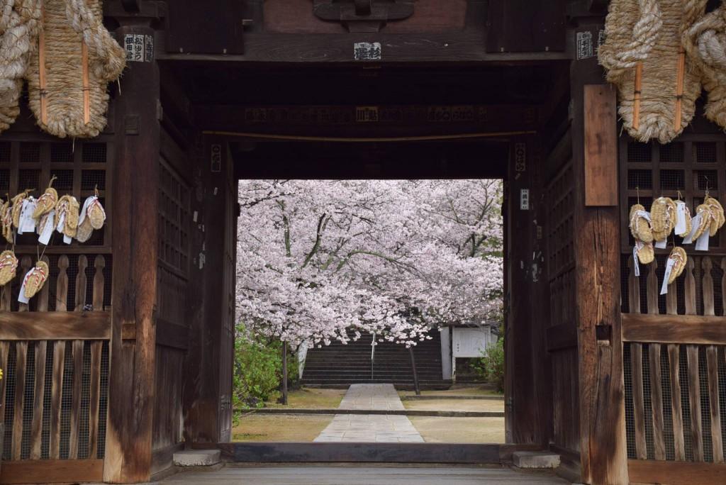 西国寺 桜
