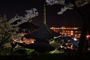海雲塔の夜桜